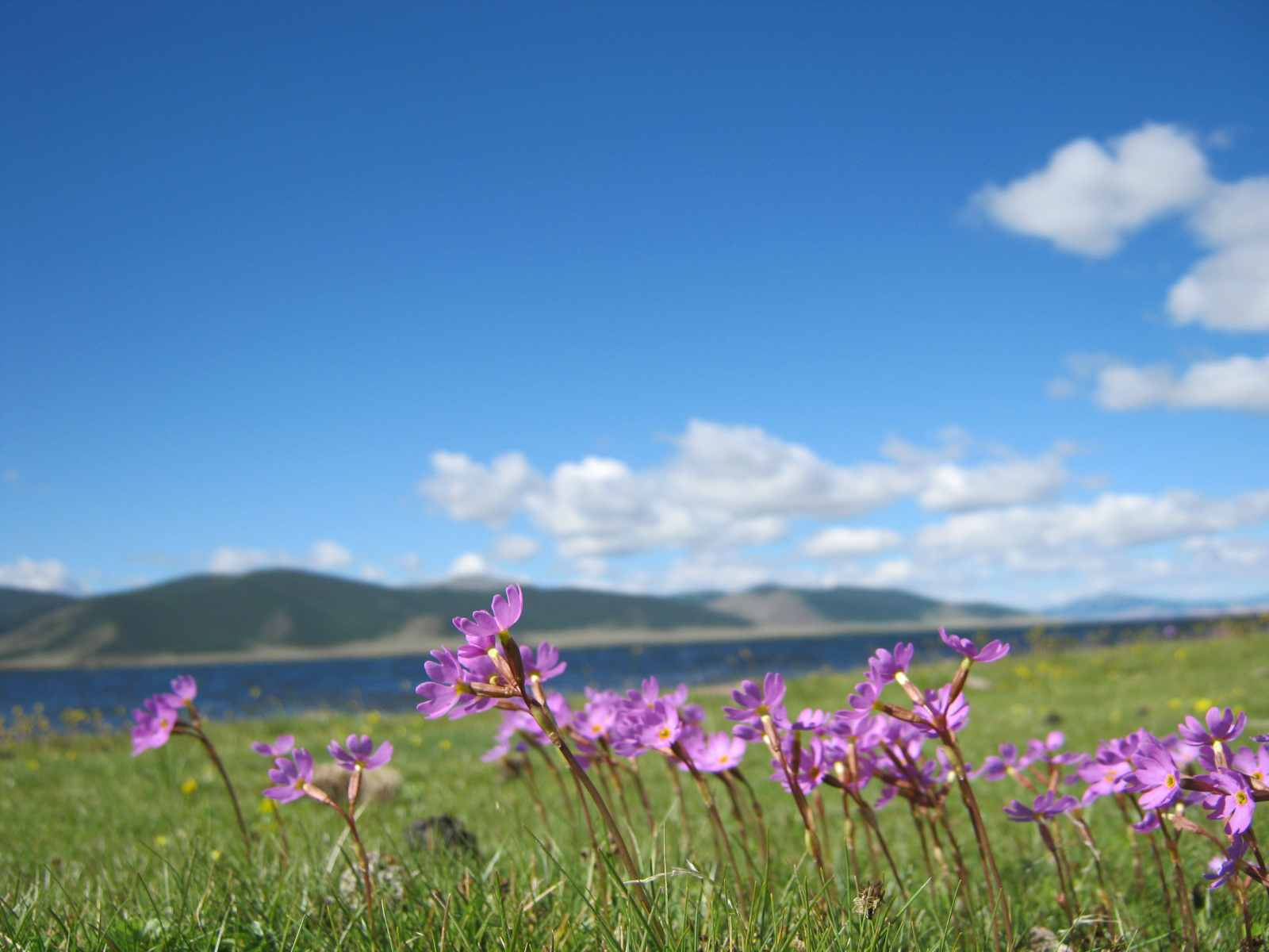 Für Botaniker ist die Mongolei ein Paradies
