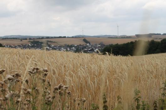 Durchs Maifeld....Felder, Felder, Felder