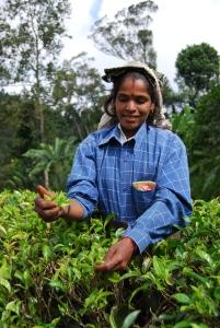 Teepflücken ist immer noch Handarbeit – und eine ziemlich mühselige noch dazu.